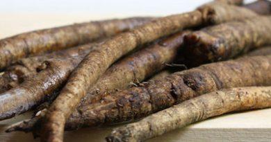Five  Amazing Benefits of Burdock Root